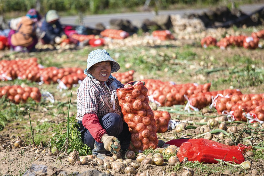 Collecting onions in a field at the base of Dangsanbong Al Oreum #1