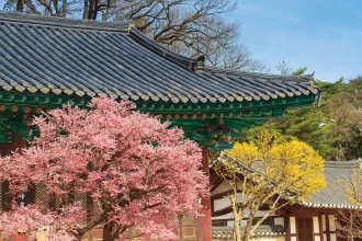 shrine-and-blossoms